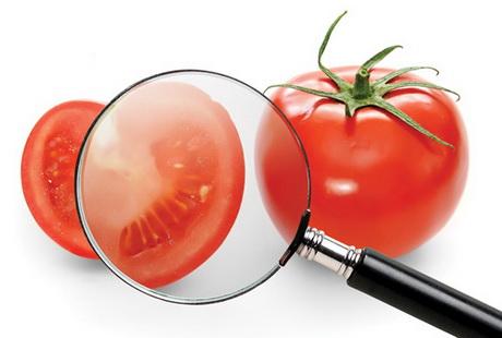 ЕС будет содействовать обучению будущих аудиторов по безопасности пищевых продуктов в Украине